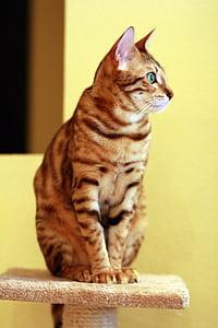 silver tabby cat on gray cat tree