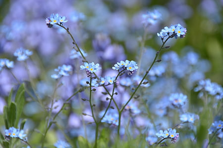 selective photography of blue petaled flwoer