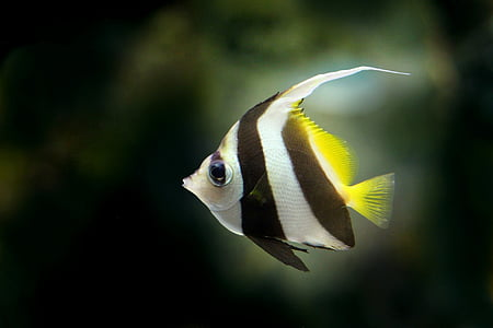 gray and black striped fish on dark background