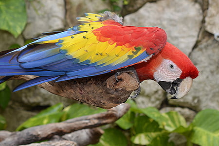 blue, yellow, and red bird