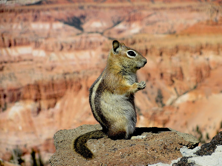 brown squirrel on brown stone