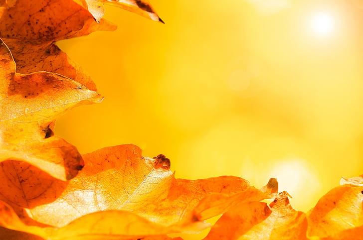orange leaves under sun