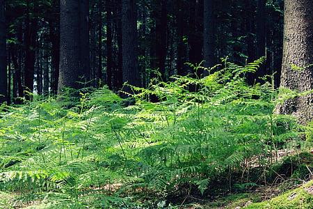 green fern plant near tree