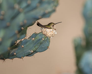 green and brown hummingbird perched on flat cactus plant