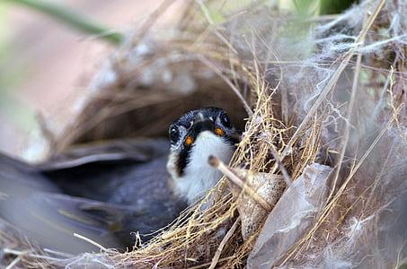 black and white bird in nest
