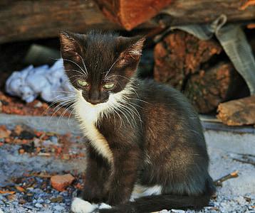 tuxido kitten near log