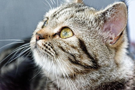 shallow focus photography of silver Tabby kitten