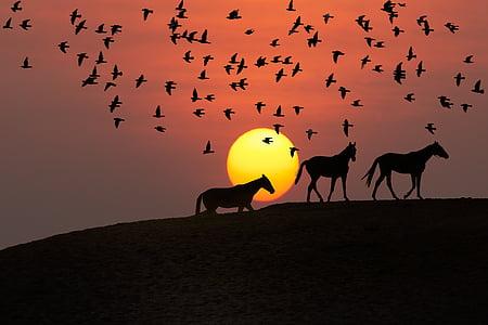 three horse under flock of birds during golden hour