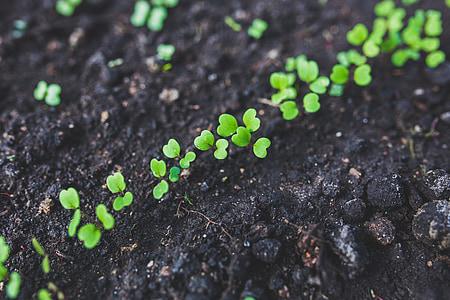photo of green leaf plants