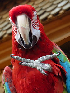 shallow focus photography of scarlet macaw