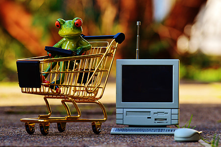 red eye tree frog in shopping cart