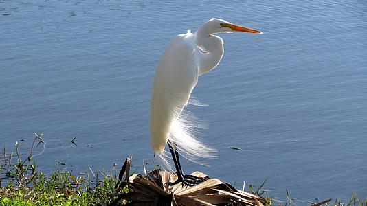 white crane near body of water