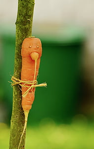 carrot tied on tree branch