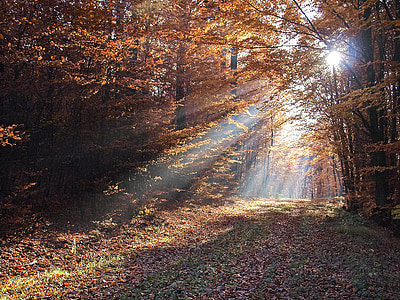 forest trees over sunlight