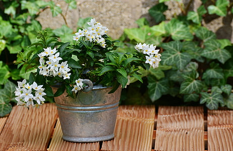 yellow petaled flowering plant on gray pot on wooden table