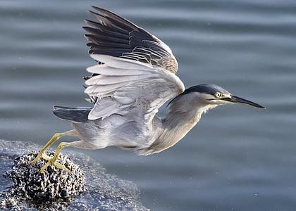 white and gray bird during daytime