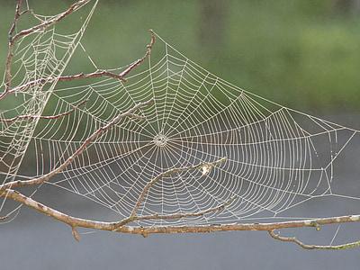 macro photography of spiderweb