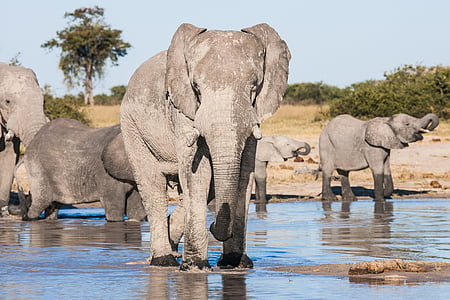 group of elephants on body of water