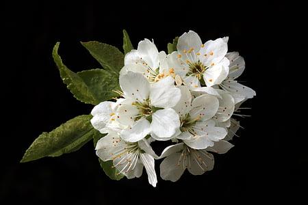 closeup photo of white petal flower