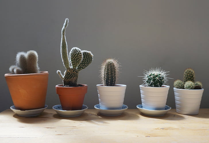 five green cacti align to each other