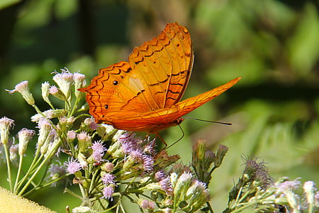 selective focus photo of orange fritillary butterfly perching on purple flower at daytime