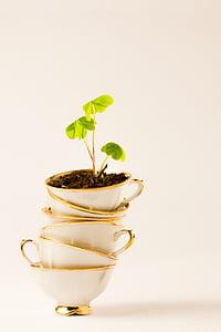 green leaf plant on white ceramic teacups