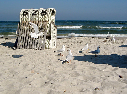 seagulls at sea shore