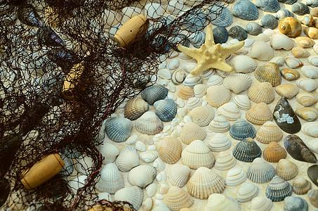 close up photo of starfish and seashells