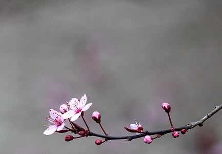 pink petal flower in shallow focus photography