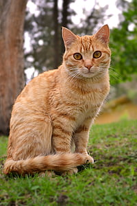 orange tabby cat sitting on green grasses selective focus photo