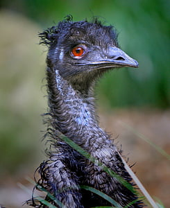 shallow focus photo of Ostrich