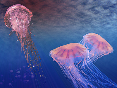 pink jellyfish wallpaper