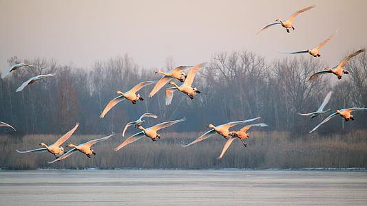 flock of white bird flying over body of water at daytime