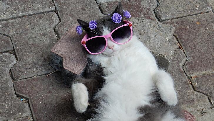 tuxedo cat wearing pink sunglasses lying on gray pavement