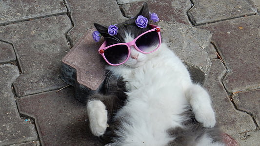 tuxedo cat wearing pink sunglasses lying on gray pavement