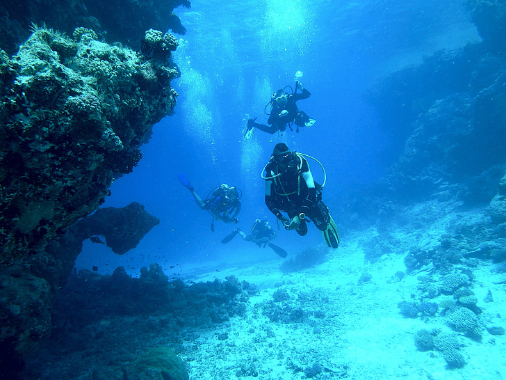 several divers near corals during daytime