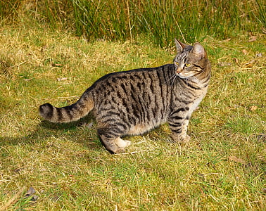 brown tabby cat standing on green grass at daytime