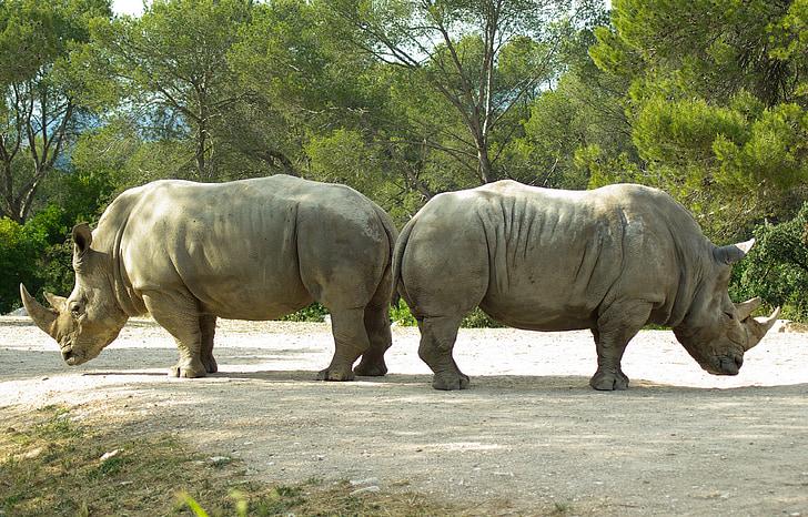 two rhinoceros beside each other