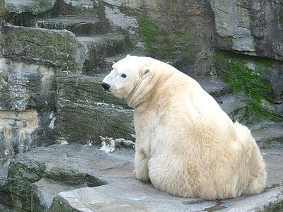 photo of polar bear sitting on gray surface