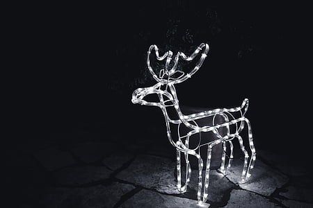 white string light deer