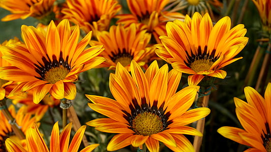 orange flowers closeup photography