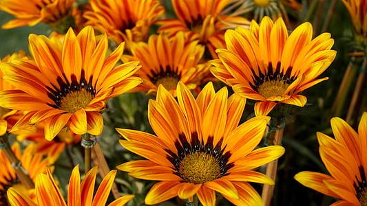 orange flowers closeup photography