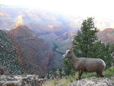 brown deer on mountain