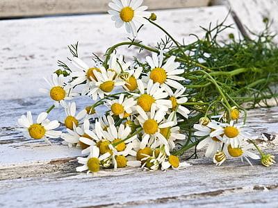 photography of white petaled flowers
