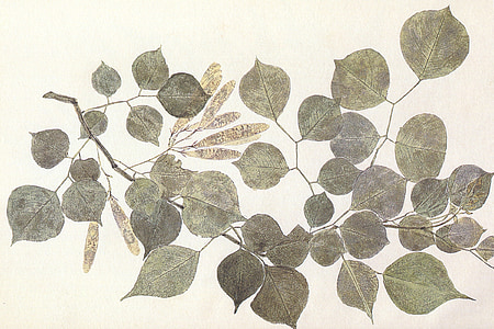 gray and brown leaves