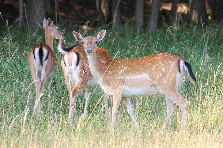 photo of three deer on grass