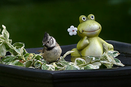 frog figurine on basin with water beside bird