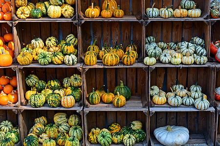assorted-color squash lot