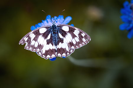 shallow focus photography of marbled white butterfly