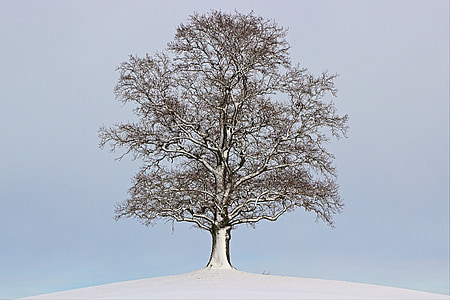snow covered bare tree